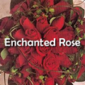Enchanted Rose Floral Design